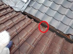 守口市での台風被害屋根調査です