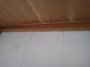 堺市での屋根修理・雨漏り修理調査