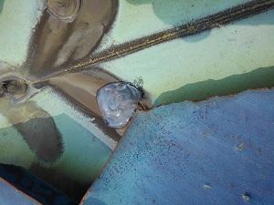 貝塚市の瓦屋根修理調査