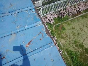 寝屋川市の板金屋根修理調査