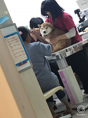 こまちゃん診察